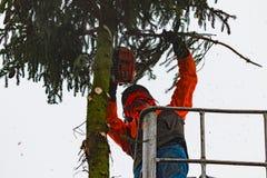 RYCZYWOL, POLÔNIA - 18 de fevereiro de 2017 - árvore do corte do lenhador com uma serra de cadeia Foto de Stock Royalty Free