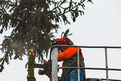 RYCZYWOL, POLÔNIA - 18 de fevereiro de 2017 - árvore do corte do lenhador com uma serra de cadeia Imagens de Stock