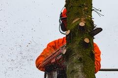 RYCZYWOL, POLÔNIA - 18 de fevereiro de 2017 - árvore do corte do lenhador com uma serra de cadeia Fotos de Stock