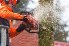 RYCZYWOL, POLÔNIA - 18 de fevereiro de 2017 - árvore do corte do lenhador com uma serra de cadeia Fotografia de Stock