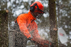 RYCZYWOL, POLAND - FEBRUARY 18, 2017 - Woodcutter cutting tree with a chainsaw stock photos