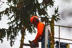 RYCZYWOL, POLEN - 18. Februar 2017 - Holzfällerausschnittbaum mit einer Kettensäge Lizenzfreies Stockbild