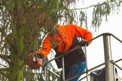 RYCZYWOL, POLEN - 18. Februar 2017 - Holzfällerausschnittbaum mit einer Kettensäge Lizenzfreie Stockfotografie