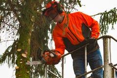 RYCZYWOL, POLEN - 18. Februar 2017 - Holzfällerausschnittbaum mit einer Kettensäge Lizenzfreie Stockfotos