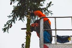RYCZYWOL, POLEN - 18. Februar 2017 - Holzfällerausschnittbaum mit einer Kettensäge Stockfotografie