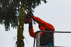 RYCZYWOL, POLEN - 18. Februar 2017 - Holzfällerausschnittbaum mit einer Kettensäge Lizenzfreie Stockbilder