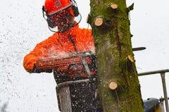 RYCZYWOL, POLEN - 18. Februar 2017 - Holzfällerausschnittbaum mit einer Kettensäge Stockbilder
