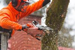 RYCZYWOL, POLEN - 18. Februar 2017 - Holzfällerausschnittbaum mit einer Kettensäge Stockbild