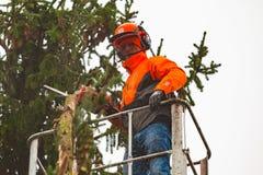 RYCZYWOL, POLOGNE - 18 février 2017 - arbre de coupe de bûcheron avec une tronçonneuse Photographie stock libre de droits