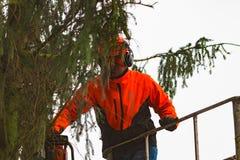 RYCZYWOL, POLONIA - 18 de febrero de 2017 - árbol del corte del leñador con una motosierra Imagen de archivo libre de regalías