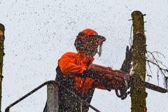 RYCZYWOL, POLONIA - 18 de febrero de 2017 - árbol del corte del leñador con una motosierra Fotografía de archivo