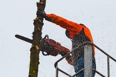 RYCZYWOL, POLONIA - 18 de febrero de 2017 - árbol del corte del leñador con una motosierra Fotos de archivo