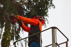 RYCZYWOL, POLONIA - 18 de febrero de 2017 - árbol del corte del leñador con una motosierra Imágenes de archivo libres de regalías