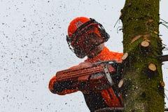 RYCZYWOL, POLONIA - 18 de febrero de 2017 - árbol del corte del leñador con una motosierra Fotos de archivo libres de regalías