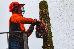 RYCZYWOL, POLONIA - 18 de febrero de 2017 - árbol del corte del leñador con una motosierra Foto de archivo
