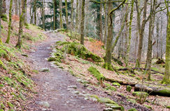 Rydal Forest Path Stock Photography