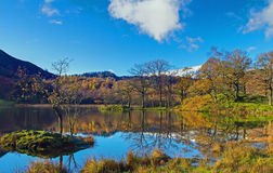 Rydal Trees Stock Images