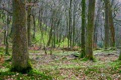 Rydal Wald Stockbild