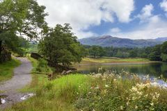 Rydal Water, Cumbria. Rydal Water near Grasmere, the Lake District, Cumbria, England Royalty Free Stock Photos