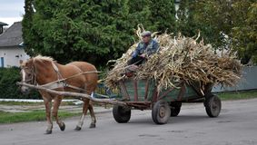 Firman`s village runs a four-wheeled cart with corn-laden sheave. Rydoduby - Chortkiv - Ternopil - Ukraine - October 13, 2017. Street village Rydoduby coachman royalty free stock image