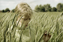 In the rye Stock Image