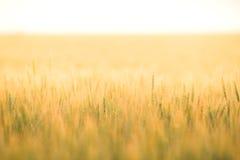 Rye au coucher du soleil Photos libres de droits