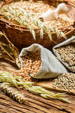Rye, barley and wheat are the basis for good bread Royalty Free Stock Photography