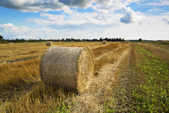 Rye is bended to ball for storage Royalty Free Stock Images