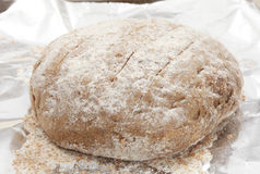 Rye bread dough rising Royalty Free Stock Images