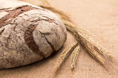 Rye bread and ears on sacking. Rye bread and wheat on sacking Royalty Free Stock Image