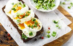 Rye bread sandwich with boiled egg, cheese, freshly ground pepper and daikon or radish sprouts. Delicious gourmet Breakfast. Selective focus stock photo