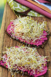 Rye bread with sprouts and beetroot cream. On wooden cutting board Stock Images