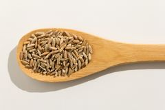 Rye cereal grain. Nutritious grains on a wooden spoon on white b. Secale cereale is scientific name of Rye cereal grain. Also known as Centeio portuguese and Royalty Free Stock Images