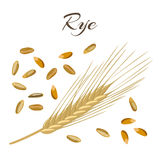 Rye ear and grains. Vector illustration Royalty Free Stock Photos