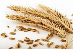 Rye ears and grains. Ripe rye ears and  seeds  on white background Stock Photo