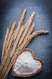 Rye ears and piala with flour Stock Image