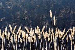 Rye ears in a row on a dark background. Flat lay of the copy space. Creative composition. Rye ears in a row on a dark background. Flat lay of the copy space royalty free stock image