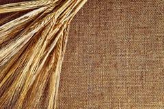Rye en el fondo del yute Imagen de archivo