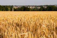 Rye-Feld mit zwei Türmen Stockbild