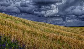 Rye-Feld und bewölkter Himmel lizenzfreie stockfotos