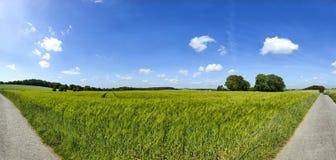 Rye-Feldpanorama mit blauem Himmel und Wolken Stockbilder