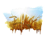 Rye field on a beautiful sunny sky background. Hand painting Stock Images