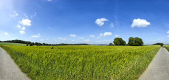 Rye field panorama with blue sky and clouds Stock Images