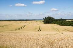 Rye Fields stock photos