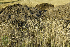 Rye fields and manure heaps Stock Photos