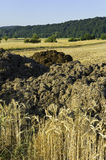 Rye fields and manure heaps Royalty Free Stock Photos