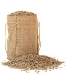 Rye Grain Royalty Free Stock Image