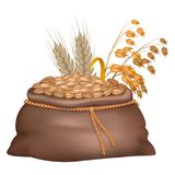Rye Grains in Brown Sack with its and Oat Ears. On background isolated on white. Closeup vector illustration of crude crop harvest Royalty Free Stock Images