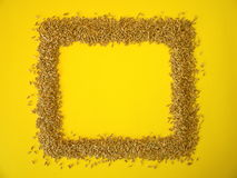 Rye grains frame Royalty Free Stock Photography