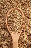 Rye grains with spoon Royalty Free Stock Images